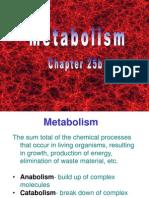 025b Metabolism