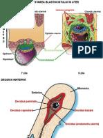 18 20-11-20Dezvoltarea Embrionara La Om
