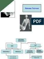 Sistema Nervoso Parte I