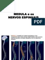 Sistema Nervoso Parte II