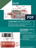 Musculo Neuro