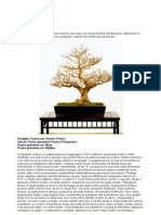 (eBook - Ita - Botanica - Bonsai) Bonsai Di Melograno (Doc)