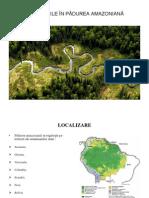 DEFRIȘĂRILE ÎN PĂDUREA AMAZONIANĂ