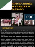 El Sacrificio Animal en Los Camales o Faenado Elvis