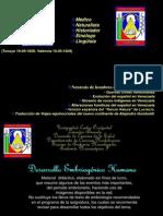 embrionario.pps