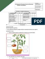 ADECUACION Evaluacion Cienciasnat 3ros Unidad Plantas