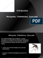 INSECTOS.pptx