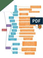 Mapa Conceptual Sistema Digestivo