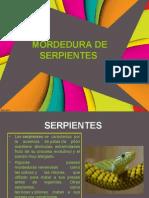 Higiene Mordeduras de Serpiente
