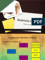 Anatomía Cadera