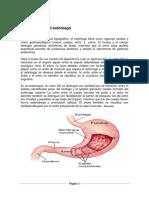 Anatomía del estómago.docx