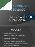 61000621 Histologia Del Estomago