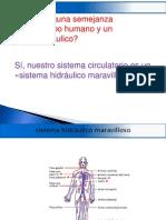 Elcuerpo Humano Sistema Hidraulico