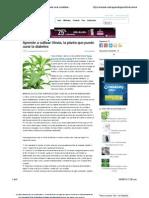 Aprende a Cultivar Stevia, La Planta Que Puede Curar La Diabetes | Ecocosas