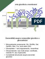 Glicocalix