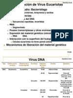 5.2. Multiplicaci+¦n de Virus Eucariotas
