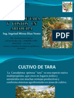 Cultivo de Tara en Arequipa