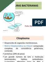 Estruturas Bacterianas2