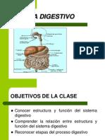 Sistema Digestivo (1)