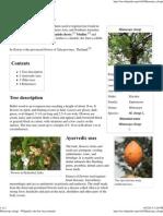 Mimusops Elengi - Wikipedia, The Free Encyclopedia
