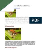 10 Jenis Katak Teraneh Dan Terunik Di Dunia