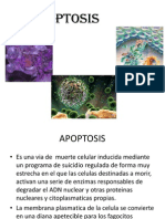 Lewsion Celular Apoptosis