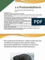Equidnas e o Protoendotherm
