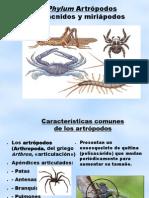 Phylum Artrópodos