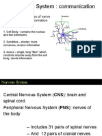 Ch 09 Nervous System (a)