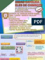 IF PATOLOGIA GRUPO1.pdf