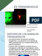 Animales Transgenicos
