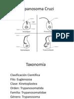 Trypanosoma Cruzi presentacion