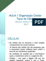 Aula 1 Organizac3a7c3a3o Celular