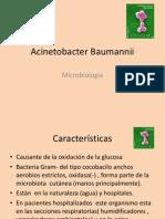 acinnetobacter baunannii