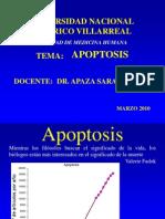 3.2.Apoptosis Dr. Apaza!