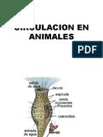 Circulacion Animales