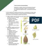 Tipos de Frutos en Angiospermas