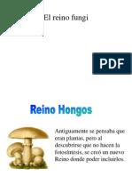 5 Reino Fungi
