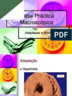 2.2 Adaptação e Morte Celular (Práctica Macroscópica)