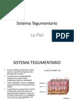 Anatomia La Piel 171