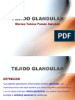 3-4.Tejido Glandular.version2004.ppt