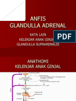Anfis. Adrenal