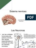 1sistema Nervioso