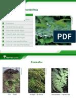Algas Verdes Pardas e Vermelhas Briófitas e Pteridófitas - 7º ano