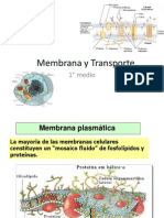 ppt 3Membrana y Transporte.ppt
