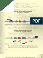 12 - Cap. 3 - LIBRE DEL COCH y un higaldujo de la Información Genética - Parte 3