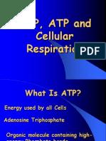 Cellular Respiration ABRIDGED