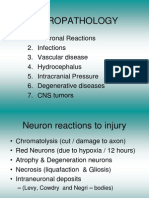 Neuropath Lectures 1