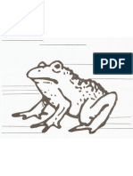 Label the Frog
