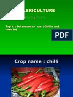 solanacea crop (chillie and tomato)